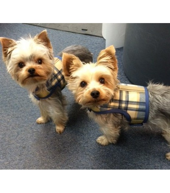 Blue and Tan Plaid Small Dog Harness